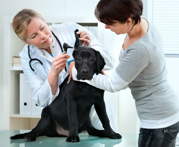 Veterinary Practice Financing - Free Consultation and Top-Rated Service